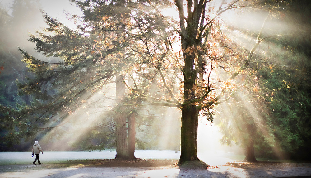 The sun rays on a misty morning in Vancouver, BC's Stanley Park. (2015)