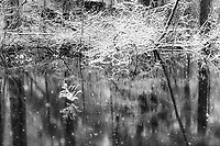 https://Duncan.co/snow-covered-branches-and-pond