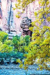 Autumn, Pillar, golden cottonwood, red cliffs, Virgin River, Zion National Park