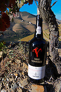schist soil vineyard vau vintage 2000 quinta do seixo sandeman douro portugal