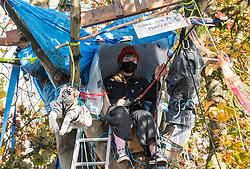 © Licensed to London News Pictures; 02/11/2020; Bristol, UK. Campaigners for the Save The M32 Maples Campaign occupy the last remaining tree and treehouse this morning after contractors working for a developer from 6am have cut down 2 of the 3 maple trees where the campaigners had built tree houses to protect the 3 remaining Norway Maple trees on Lower Ashley Road in the St Pauls area of Bristol close to the M32 motorway. Several people from the campaign are occupying the remaining tree and tree house. The campaign wanted the trees kept to enhance the environment and help remove pollution in what is a traffic congested area. The campaign asked the police Serious Fraud Unit to investigate allegations of a fraudulent Bristol City Council giveaway of £500,000 of public property, including the trees. Campaigners have obtained documents which show the mature trees fall outside the boundary of the land on Lower Ashley Road owned by John Garlick, and they claim the strip of land the three remaining protected trees are on belongs to Bristol City Council's highways department. Bristol City Council denies the claim and says the existing maps are inaccurate and that the trees are not on council owned land as it was all sold off by the council. Two of five trees originally there were felled on New Year's Eve, and campaigners chained themselves to remaining trees to prevent them being cut down. Photo credit: Simon Chapman/LNP.