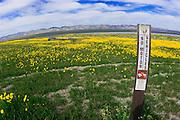 """No vehicle"" sign and tire tracks through Goldfields along Soda Lake, Carrizo Plain National Monument, California USA"