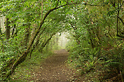 A trail leading to The Nature Conservancy's Cascade Head Preserve on the Oregon Coast.