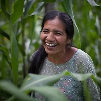 Simona Choc in her corn field. World Renew is beginning to work in Concepción Actelá, through its Guatemalan partner ADIP.