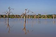 Landscape of dead trees in water filled tank , Yala National Park, Sri Lanka