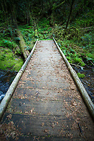 Eula Ridge Trail near Oakridge, Oregon.