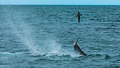 STUNNING IMAGES CAPTURE ORCAS AS THEY DRIVE UP ON TO BEACH TO HUNT FOR SEA LION'S