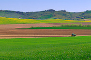 Crop, rape and plowed fields are stripes of vivid colours in the country side around the medieval town of Pitigliano in Tuscany, Italy.