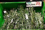 Rosemary, Moore Wilson Fresh Market, Wellington, North Island, New Zealand