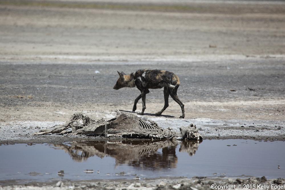 Serengeti, Tanzania, Feb 2015 african wildlife