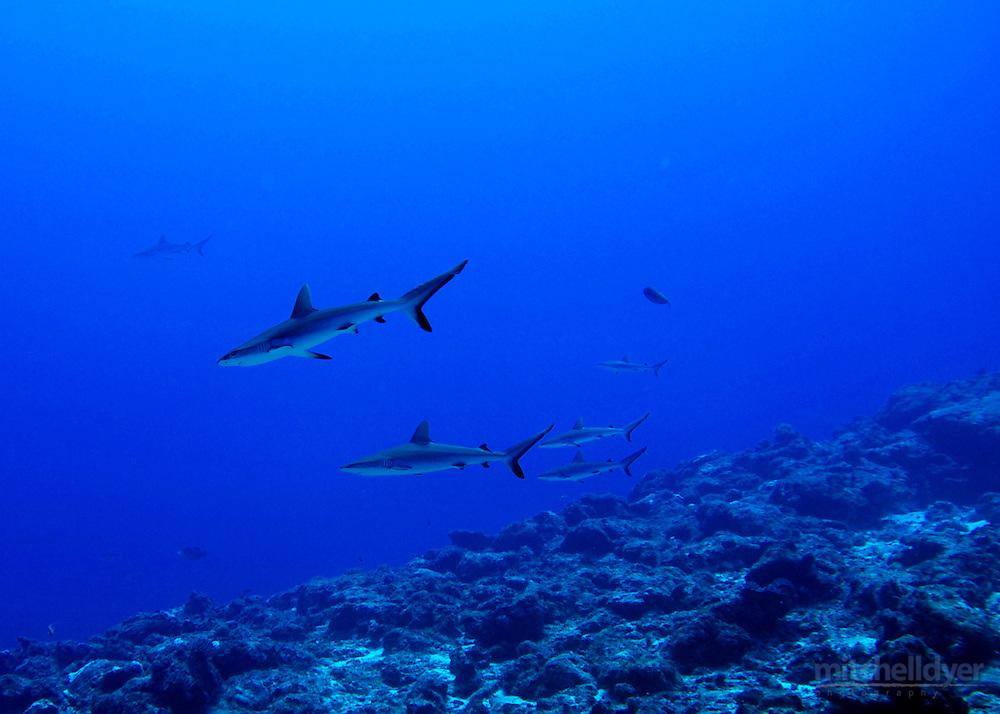 Jeremy Conklin scuba diving in Truk Lagoon, Federarted States Micronesia