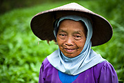 Woman in ricefields, Malang