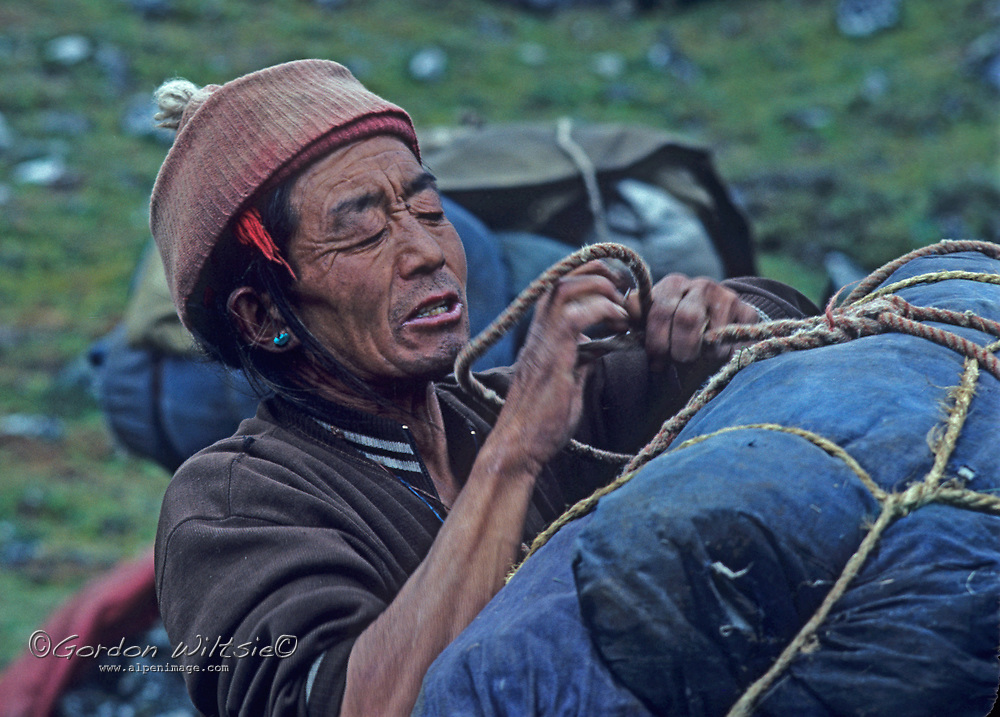 A Sherpa yak driver loads his animal on the Mount Everest trekking trail in the Khumbu region, Nepal.