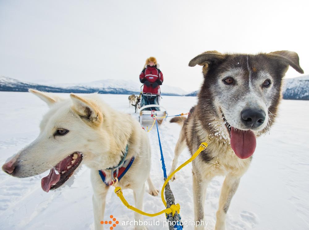 Yukon dog sledding at Sky High Wilderness Ranch.