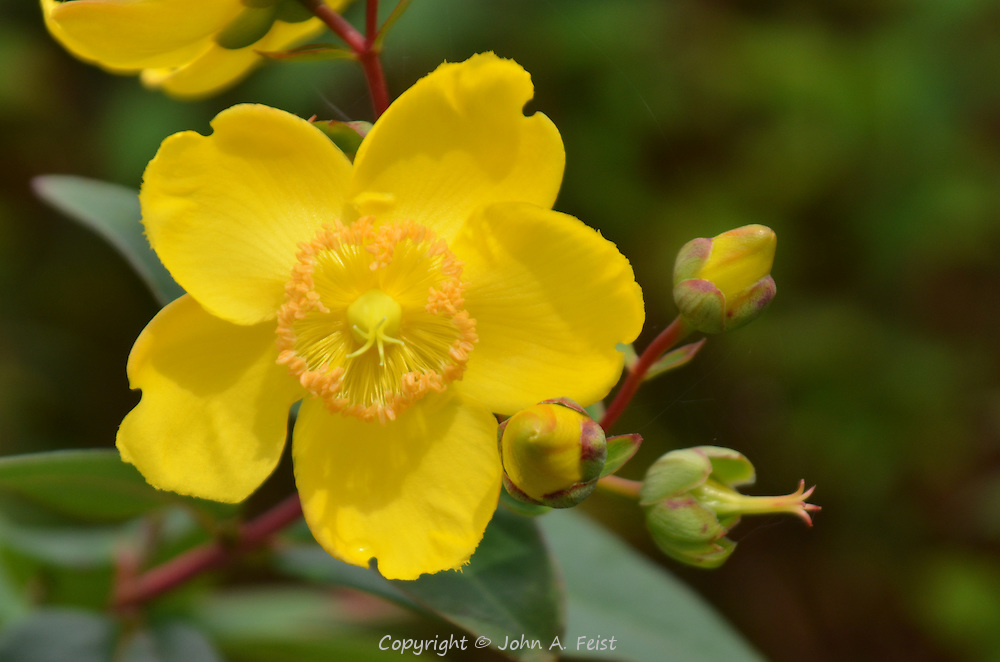 A branch of yellow flowers outside the Belleek factory in County Mayo, Northern Ireland