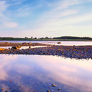 Low tide at Great Wass Island on the coast of Maine