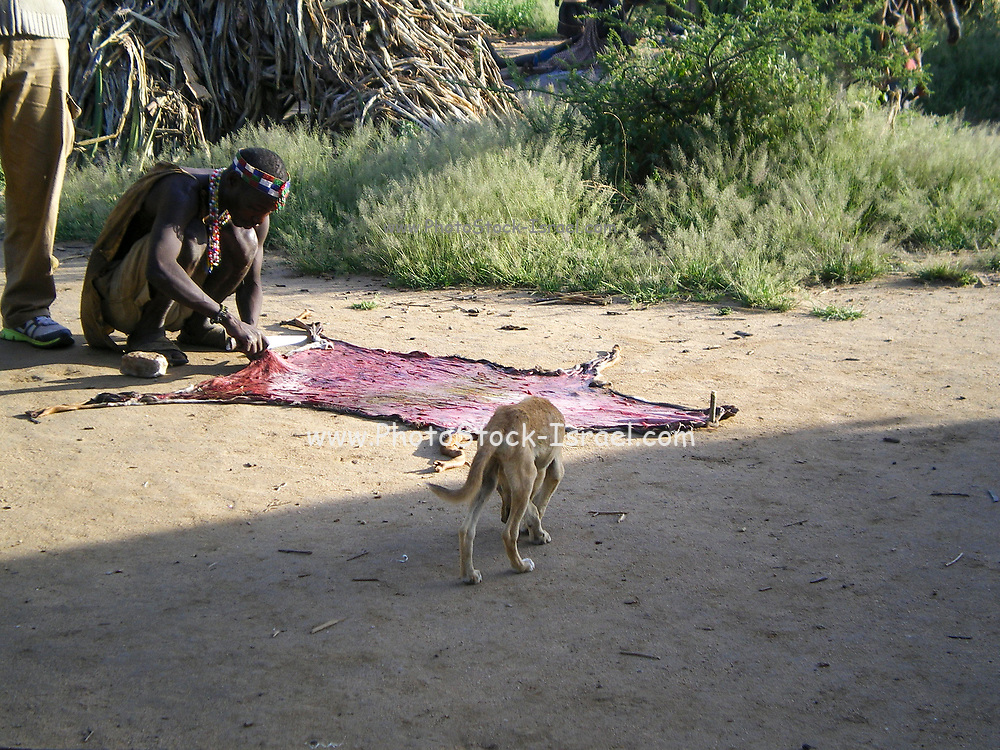Hadzabe man curing leather from an antelope hide. Photographed at Lake Eyasi, Tanzania