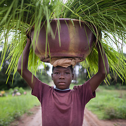 Food and agriculture, Sierra Leone