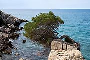 Spanish coast with rocks and a pine-tree near Salou.