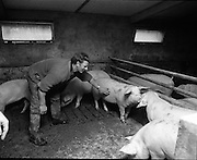 Pig Houses in Cavan/Monaghan     (J89)..1975..18.11.1975..11.18.1975..11th November 1975..Images are part of a collection commissioned by Ranks Foods,Farming and Cereal division. The images show the pig houses in the Cavan/Monaghan area where some of the Ranks livestock feed is used..Included in the photographs are two of the pig farmers who are taking part in the project.