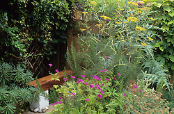 Hidden wooden bench at rear of the garden with Geranium psilostemon, fennel - Foeniculum vulgare -  and cardoon
