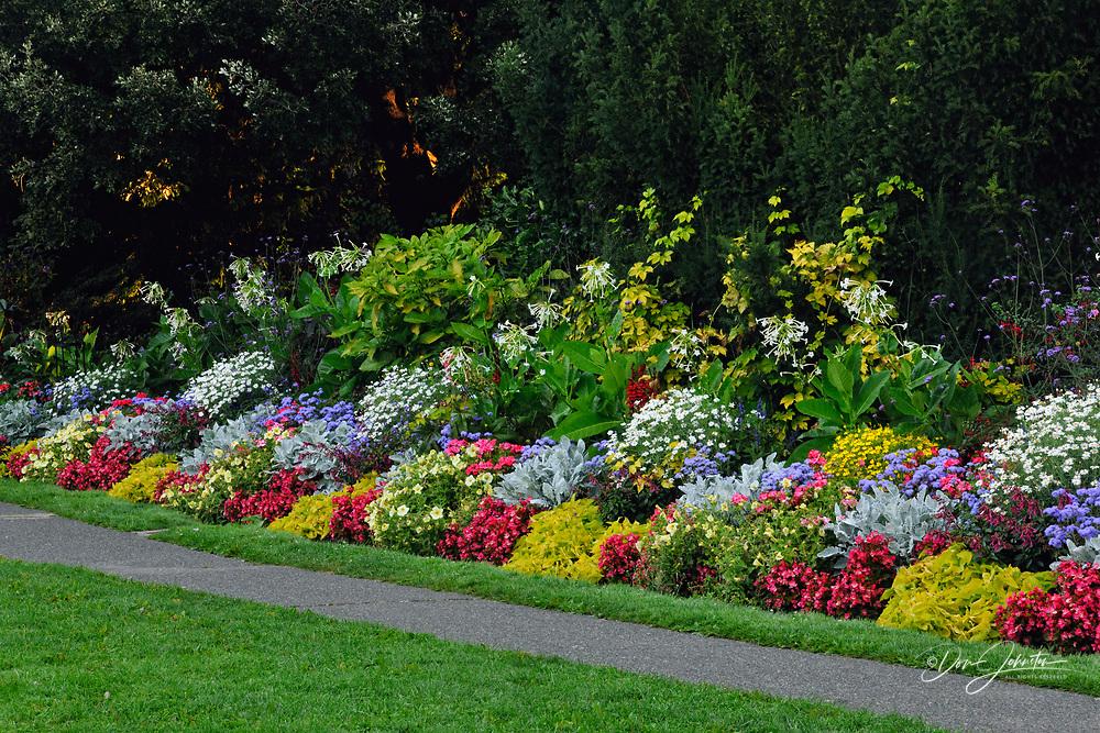 Beacon Hill Park in late summer at dawn, Victoria, BC, Canada
