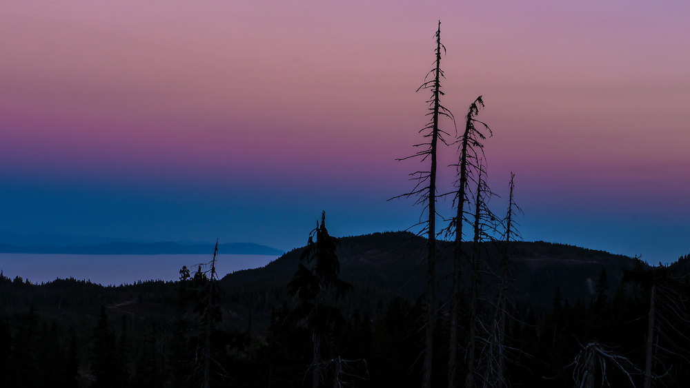 Pink sky fades to purple, then dark blue at dusk behind a silhouetted stand of dead coniferous trees near Strathcona Provincial Park, Vancouver Island, BC Canada. The Strait of Georgia is seen to the lower left.
