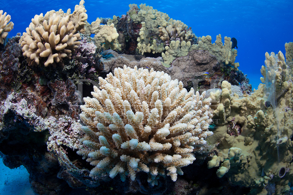 Coral Reef topography at  Beveridge Reef a remote territory of Niue in the South Pacific<br /> Monday 05 January 2015<br /> Photograph Richard Robinson © 2015