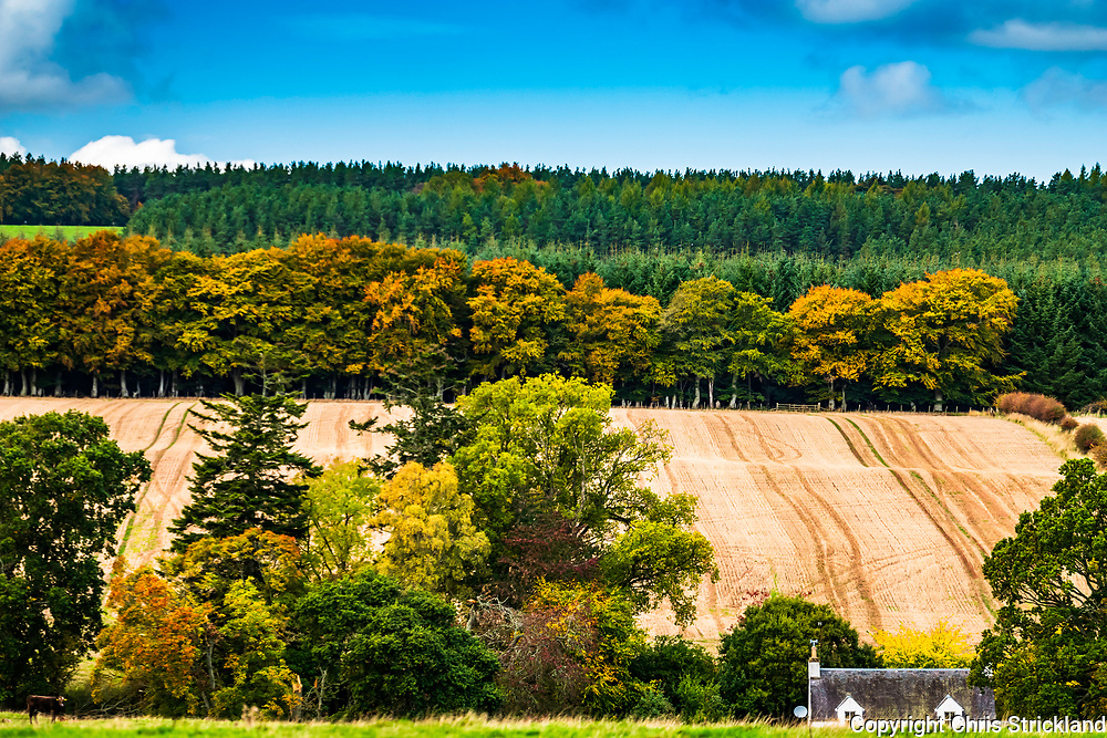 Birkenside, Jedburgh, Scottish Borders, UK. 5th October 2018. Vibrant autumn colours of Birkenside wood and stubble fields against a blue sky on a pleasant October afternoon in the Scottish Borders.