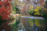 A Quiet Little Pond Adorned In Autumn Colors, Southwestern Ohio