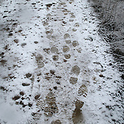 Footprints of pilgrims in the snow near Sahagun, Leon province . Spain . The WAY OF SAINT JAMES or CAMINO DE SANTIAGO following the French Route, between Saint Jean Pied de Port and Santiago de Compostela in Galicia, SPAIN. Tradition says that the body and head of St. James, after his execution circa. 44 AD, was taken by boat from Jerusalem to Santiago de Compostela. The Cathedral built to keep the remains has long been regarded as important as Rome and Jerusalem in terms of Christian religious significance, a site worthy to be a pilgrimage destination for over a thousand years. In addition to people undertaking a religious pilgrimage, there are many travellers and hikers who nowadays walk the route for non-religious reasons: travel, sport, or simply the challenge of weeks of walking in a foreign land. In Spain there are many different paths to reach Santiago. The three main ones are the French, the Silver and the Coastal or Northern Way. The pilgrimage was named one of UNESCO's World Heritage Sites in 1993. When there is a Holy Compostellan Year (whenever July 25 falls on a Sunday; the next will be 2010) the Galician government's Xacobeo tourism campaign is unleashed once more. Last Compostellan year was 2004 and the number of pilgrims increased to almost 200.000 people.