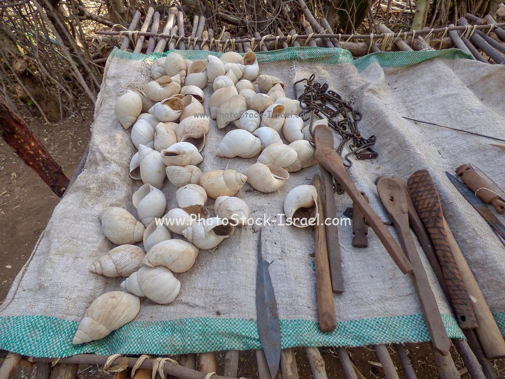 Seashells, tools and utensils on display at the Datoga tribe. Lake Eyasi, Tanzania