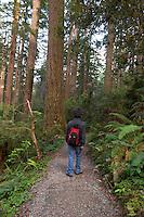 Hiker at The Lady Bird Johnson Grove Trail, Redwood National Park, California