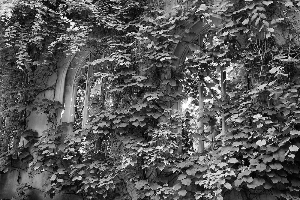 St. Dunstans Overgrown - London - Black & White