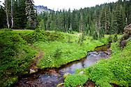 Spray Park meadow in Mount Rainier National Forest