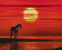 A horse quietly watches the sunset over the sea. The evening turns red and the sun is lightly covered by some slumbering clouds, while some seagulls fly through the red sky. This atmospheric work can be purchased in various materials and formats. –<br /> -<br /> BUY THIS PRINT AT<br /> <br /> FINE ART AMERICA / PIXELS<br /> ENGLISH<br /> https://janke.pixels.com/featured/a-horse-watching-the-sunset-over-the-sea-jan-keteleer.html<br /> <br /> <br /> WADM / OH MY PRINTS<br /> DUTCH / FRENCH / GERMAN<br /> https://www.werkaandemuur.nl/nl/shopwerk/Een-paard-kijkt-naar-de-zonsondergang-boven-de-zee/801654/132?mediumId=1&size=70x55<br /> –<br /> -