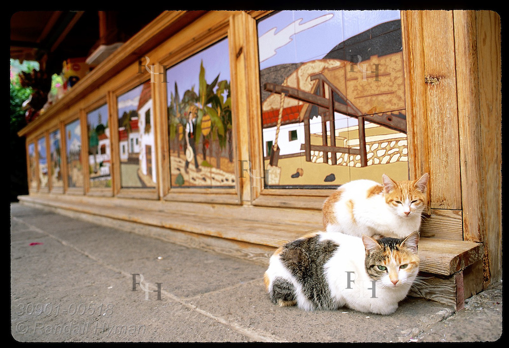 Two sleepy cats sit beside mural-decorated bar in Icod de los Vinos; Tenerife, Canary Islands. Spain