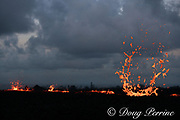 as evening falls, lava from Kilauea Volcano erupts from a fissure in Kapoho, Puna District, near Pahoa, Hawaii Island ( the Big Island ), Hawaii, U.S.A.; heat waves rising from underground magma distort the scene