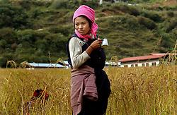 Bhutanse women harvest rice paddy in the fields of Karmeling Hotel owner Richin Wangmo in Trashi Yangtse village in Eastern Bhutan October 15, 2005. (Ami Vitale)