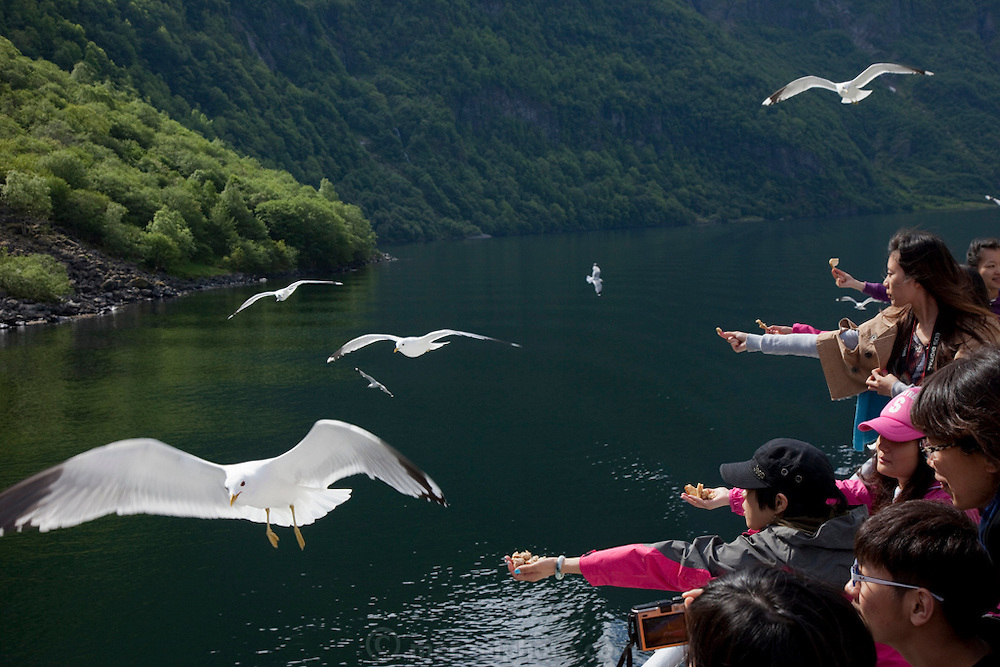 Tourists feedin gthe seagulls on the Ferry from Gudvagen to Flam along the Naeroyfjord, a Unesco World Heritage Site.