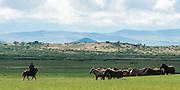 Central Mongolia, nomadic way of life