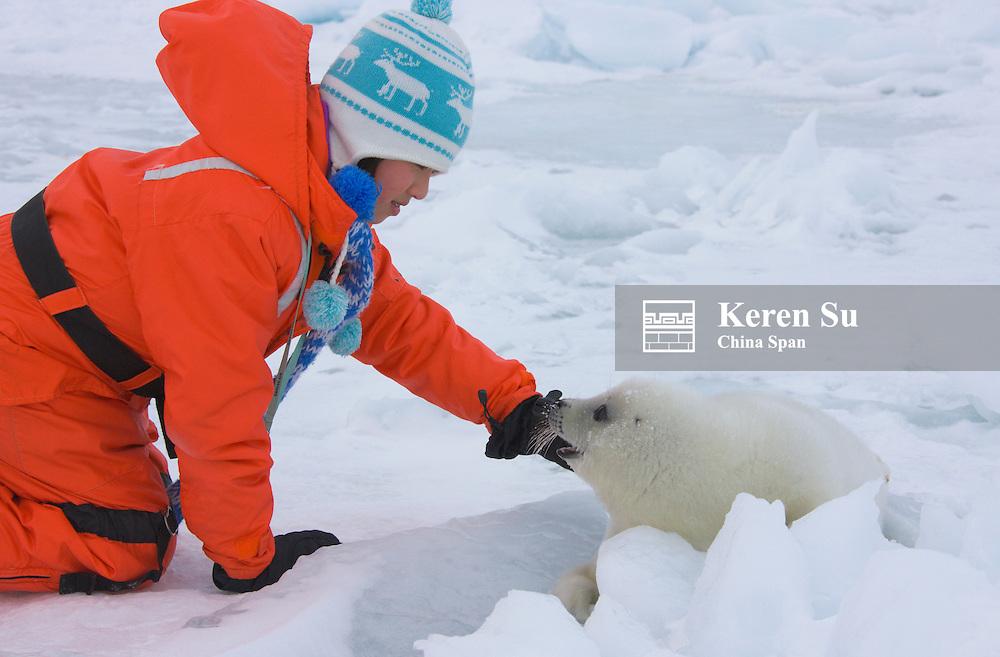 Girl with Harp Seal pup on ice, Iles de la Madeleine, Canada