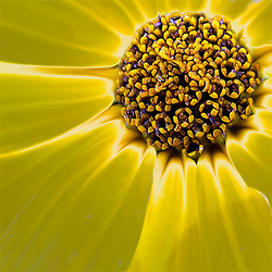 A Tight Shot Of A Yellow Floral Heart and Petals