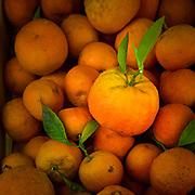 Fresh tree ripe oranges for sale in Saint-Paul-de-Vence in southern France