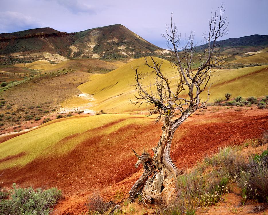 Painted Hills, Oregon USA
