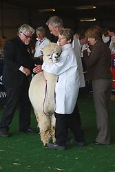 Judging Alpacas at Newark Show 2009