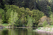 Spring foliage at Chilqua Slough along Sylvester Road near Mission, British Columbia, Canada