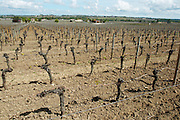 sandy gravelly soil ch moulin du cadet saint emilion bordeaux france