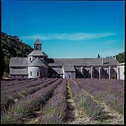 2015 July - Lavender fields
