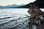 """The peaks of the Livingston Range rise above bleached tree roots on the shore of Lake McDonald at sunrise in Glacier National Park, Montana, USA. Since 1932, Canada and USA have shared Waterton-Glacier International Peace Park, which UNESCO declared a World Heritage Site (1995) containing two Biosphere Reserves (1976). Rocks in the park are primarily sedimentary layers deposited in shallow seas over 1.6 billion to 800 million years ago. During the tectonic formation of the Rocky Mountains 170 million years ago, the Lewis Overthrust displaced these old rocks over newer Cretaceous age rocks. Glaciers carved spectacular U-shaped valleys and pyramidal peaks as recently as the Last Glacial Maximum (the last """"Ice Age"""" 25,000 to 13,000 years ago). Of the 150 glaciers existing in the mid 1800s, only 25 active glaciers remain in the park as of 2010, and all may disappear by 2020, say climate scientists."""